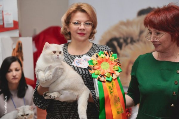 Cats show -Best